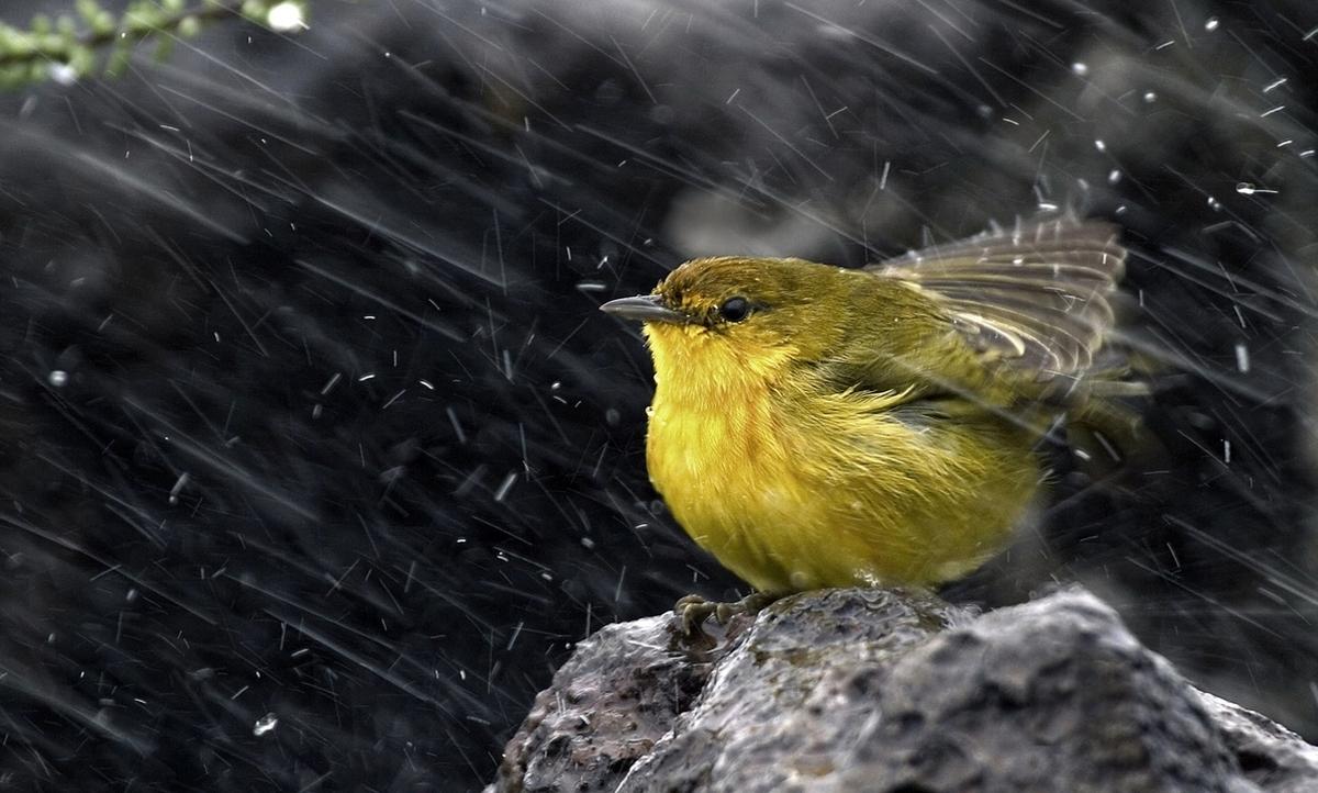 Que hace a la lluvia oler tan bien